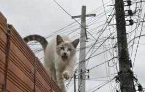 gato_energia